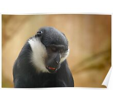 In Deep Thought! This Primate Ponders New Beginnings Poster