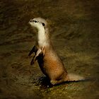 Otter by Catherine Hamilton-Veal  ©