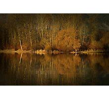 Golden Brown Photographic Print