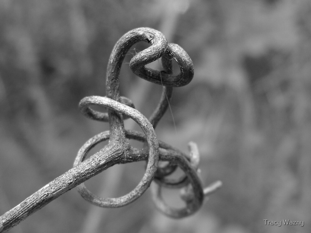 Tendril by Tracy Wazny