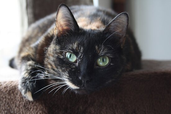 Tortie Cat by CitC