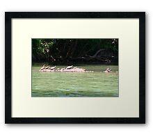 Sunbathing on a log Framed Print