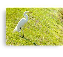 Egret on an embankment Canvas Print