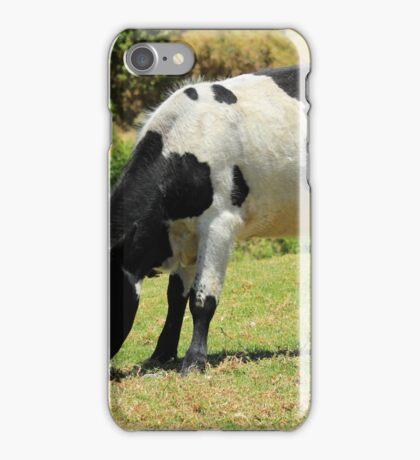 Holstein Bull on a Farm iPhone Case/Skin