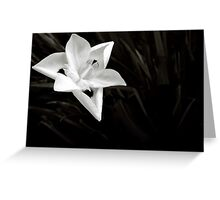 Iris of Africa in Black & White Greeting Card