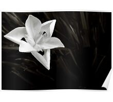Iris of Africa in Black & White Poster