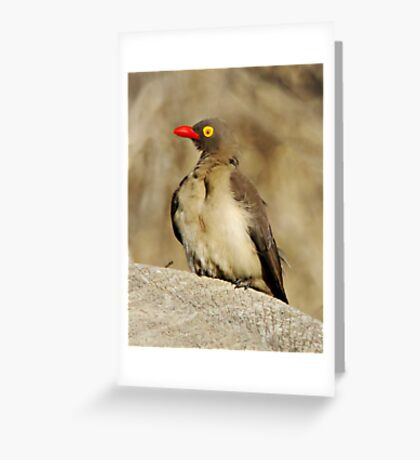 Red Billed Oxpecker Greeting Card