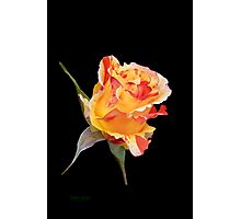 Rosebud on Ebony Photographic Print