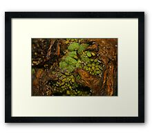 Raw Life Framed Print