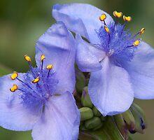Purple Flowers by RBuey