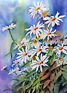 Daisies by Ann Mortimer