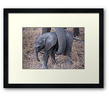 Not Too Close ! Framed Print