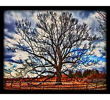 Solo Tree Photographic Print
