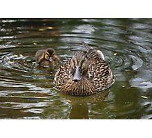 Momma Duck Photographic Print