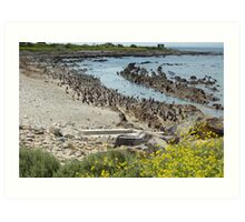 penguins of robben island Art Print