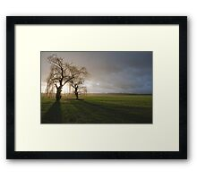 Weeping willow sunset 2 Framed Print