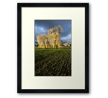 Weeping willow sunset Framed Print