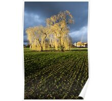 Weeping willow sunset Poster