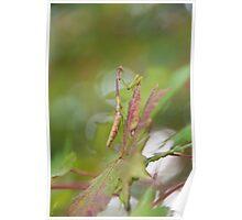 """""""Autumn Camouflage"""" - praying mantis Poster"""