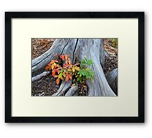 Fall Holly Framed Print