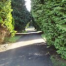 Front drive, Moorhaven formal gardens by Martin Vincent