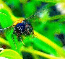 Bumblebee in flight by ♥⊱ B. Randi Bailey