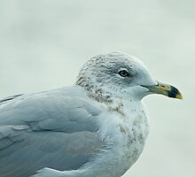 The Gull Of My Dreams by Mike Oxley