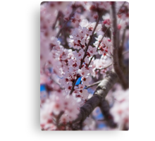 The Trees Think It's Spring Canvas Print