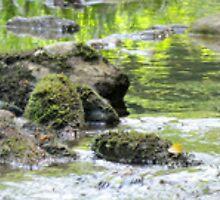 Rocks In The Cullasaja River by Jean Gregory  Evans
