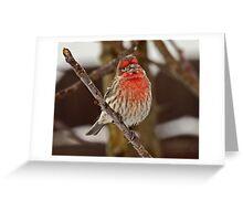 Grandpa House Finch  Greeting Card
