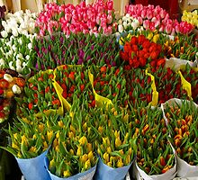 Tulips for Sale. by Lee d'Entremont