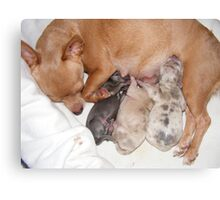 Belly Up to the Milk Bar Canvas Print