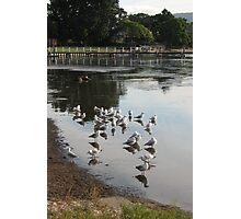 Silver Gulls at Burroo Bay Photographic Print