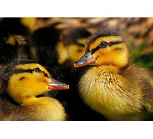 Two Hatched Ducklings Discuss How To Swim Before They Venture Into Deep Water Photographic Print