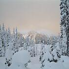 Winter Wonderland by twodoggardens