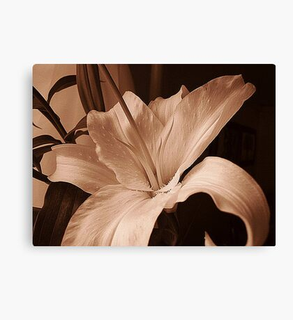 Lily In Sepia Canvas Print