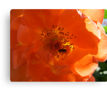 The wasp in the Cheddar Cheese Rose Canvas Print
