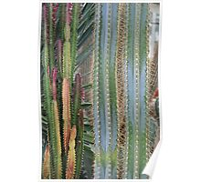Tall Cacti Poster