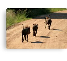 Warthogs, South Africa Canvas Print