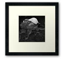 Snow-capped Rock in Creek Framed Print