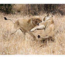 Temper Temper Photographic Print