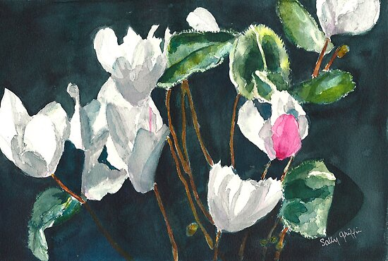 Cyclamen  by Sally Griffin