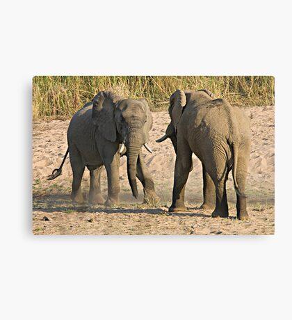 Elephant Disagreement Canvas Print