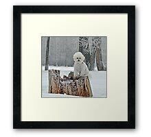 Furry Snow Angel  Framed Print