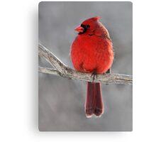 King Of Hearts /  Northern Cardinal Canvas Print