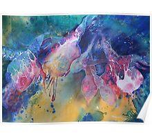 Watercolour: Rainbow of Fuchsias Poster