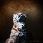 when you wish upon a star.... by janetlee