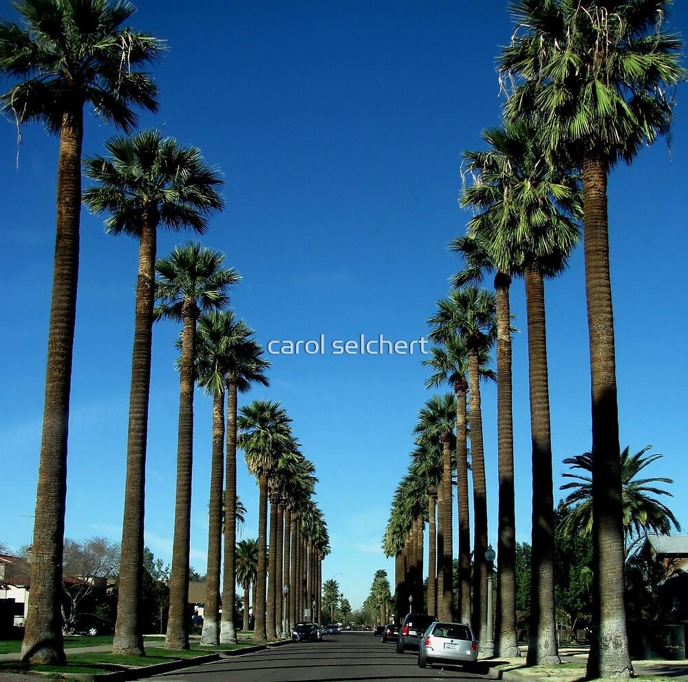 Phoenix Street by carol selchert