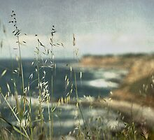 Grass on the Cliffs I by Kevin Bergen