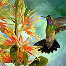 Hummingbird and Flower by Raven SiJohn